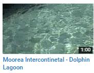 mooreadolphin